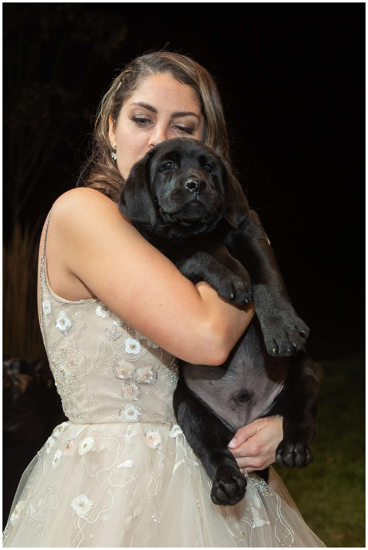 a bride wearing a ballgown and snuggling a black Labrador puppy